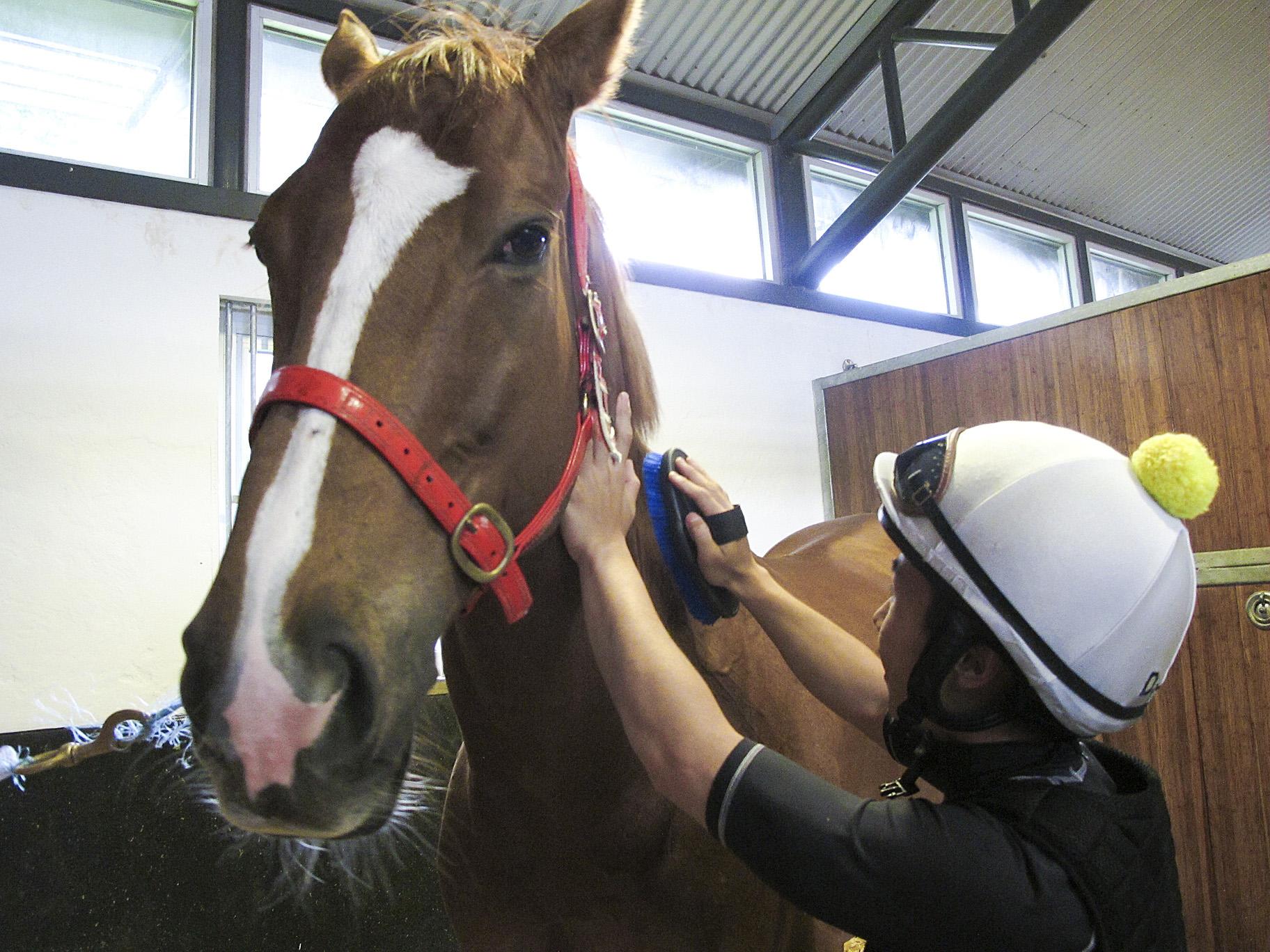 馬會聘賽事見習學員-讀多幾年書先入行-上馬都會怕