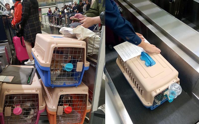 貓狗也移民-80後捨10萬月薪-赴台發展寵物移民事業-feature