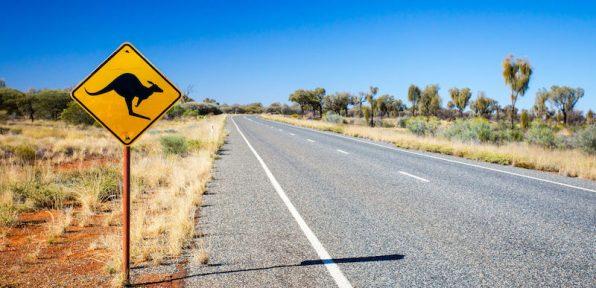 An iconic warning road sign for kangaroos near Uluru in Northern Territory, Australia